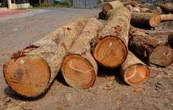 Wooden logs. In a sawmill factory stock photo