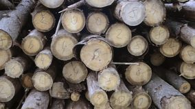 Wooden logs sorting. Many wood logs with numbers on cuts, handheld pan camera movement stock video footage