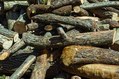 Wooden Logs Stack. Pine Wood Wooden Logs Stack. Treatment of wood, forestry. Forest business royalty free stock photography