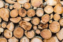 Wooden logs stacked up to become firewood. Isla Martillo, Patagonia royalty free stock photo