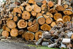 Wooden logs stacked up to become firewood. Isla Martillo, Patagonia stock images