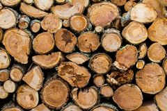 Wooden logs stacked up to become firewood. Isla Martillo, Patagonia stock photos