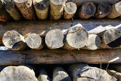 Wooden logs stored on the stack Stock Image
