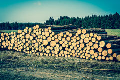 Wooden logs or trunks of trees cut and stacked on the ground Royalty Free Stock Photo