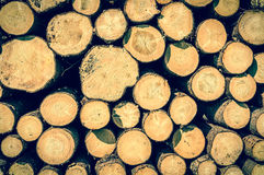 Wooden logs or trunks of trees cut and stacked on the ground Stock Photography
