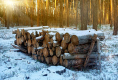 Wooden logs under snow in forest Royalty Free Stock Images