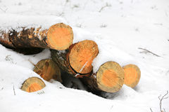 Wooden logs under snow Royalty Free Stock Photo