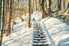 Wooden long stairs in snow Royalty Free Stock Photo