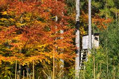 Wooden lookout tower for hunting in the woods and trees royalty free stock photos