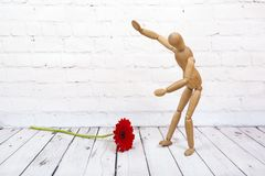 Wooden mannequin with red gerbera flower. Wooden mannequin trying to represent human movements in moving actions isolated on a white background. Anatomical model stock photography