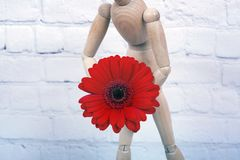 Wooden mannequin with red gerbera flower. Wooden mannequin trying to represent human movements in moving actions on a white background. Anatomical model hugs a stock image
