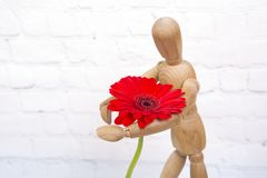 Wooden mannequin with red gerbera flower. Wooden mannequin trying to represent human movements in moving actions isolated on a white background. Anatomical model stock photo
