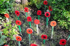 Wooden memorial poppies, Shrewsbury. Stock Images