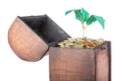 Wooden money chest filled with coins and a money tree Royalty Free Stock Images