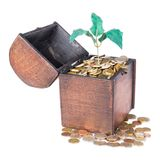 Wooden money chest filled with coins and a money tree Stock Images