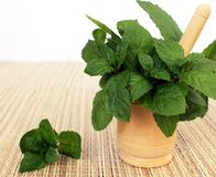 Mint in a mortar Royalty Free Stock Photo