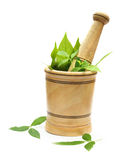 Wooden mortar-pestle and herbs Stock Photo