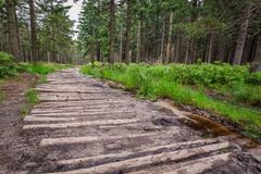 Wooden mountain trail in the forest Stock Photography
