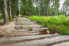 Wooden mountain trail in the forest Stock Photos