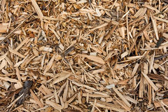 Wooden Mulch Royalty Free Stock Image