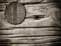 Wooden Nail Stock Photography