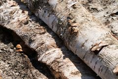 Wooden natural cut logs stock photo