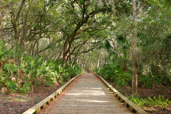 Wooden Nature Trail Bridge Royalty Free Stock Images