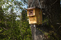 Wooden nest box on a tree, self-made bird shelter, environmental Royalty Free Stock Photography