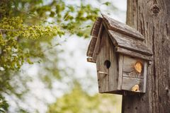 A wooden nesting box hanging on a tree. stock images