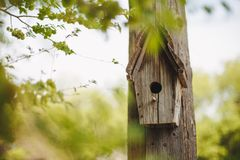 A wooden nesting box hanging on a tree. royalty free stock photography