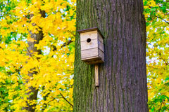 Wooden Nesting Box on Tree Trunk Royalty Free Stock Photo