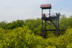 The wooden Observation tower in mangrove forest at Pranburi Fore royalty free stock image