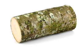 Wooden obsolete log. Top view. Royalty Free Stock Image