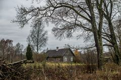 Wooden old house in bare forest Royalty Free Stock Photo