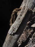 A wooden old log with a rusty metallic nails nailed to it against a black background, a fragment of a vintage rope, a designer bac Stock Image