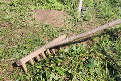 The wooden old  rake cleaning a mowed grass Royalty Free Stock Photo