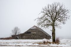 Wooden old barn and tree. Wooden old shed barn in winter, Lithuanian winter view Stock Photo