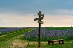 Wooden old sign post in a field of blue blooming flowers stock photo