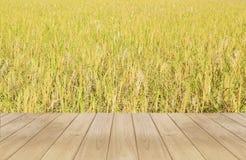 Wooden paddy field Stock Photo