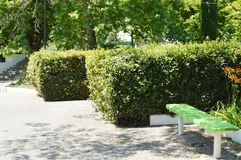Wooden painted bench along the paths in the summer Park on a Sunny day.  royalty free stock image