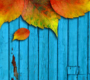 Wooden painted wall covered by some autumn leave Royalty Free Stock Images