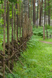 Wooden paling fence in scenic forest Stock Photography
