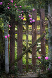 The wooden palisade in rose garden Royalty Free Stock Photography
