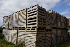 Wooden pallets for cargo and logistic Stock Photography