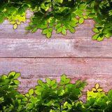 Wooden background with fresh green grass Royalty Free Stock Photos