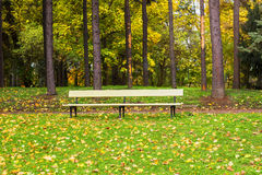 Wooden park bench Stock Photography