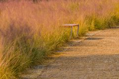 Wooden park bench in tall winter grass Stock Images