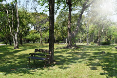 Wooden park bench under trees. Royalty Free Stock Images