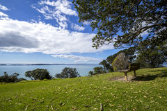 Wooden park bench under trees overlooking the sea Stock Image