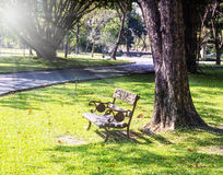 Wooden park bench under trees, Park in Bangkok. Stock Photography